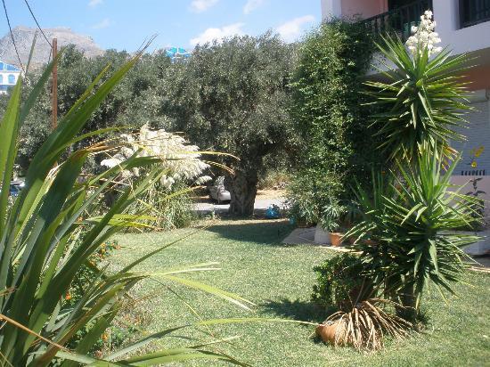 Livadi Apartments: outside area