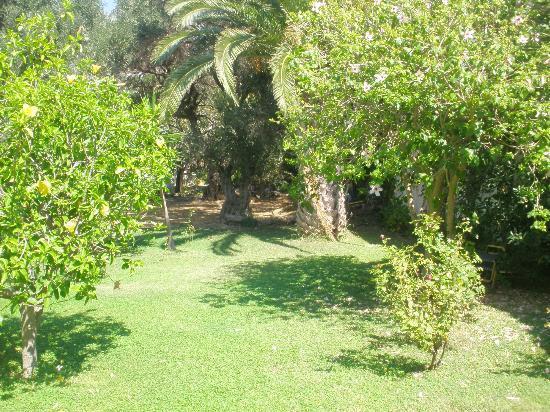 Livadi Apartments: back garden