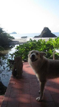 Nature's Beachfront Aparthotel: lucie my dog happy to be here