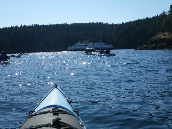 Shearwater Kayak Tours: Great views