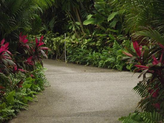 Mayan Palace Nuevo Vallarta: Walkway