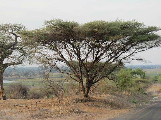 نجوما سفاري لودج: TUNDRA - Chobe National Park