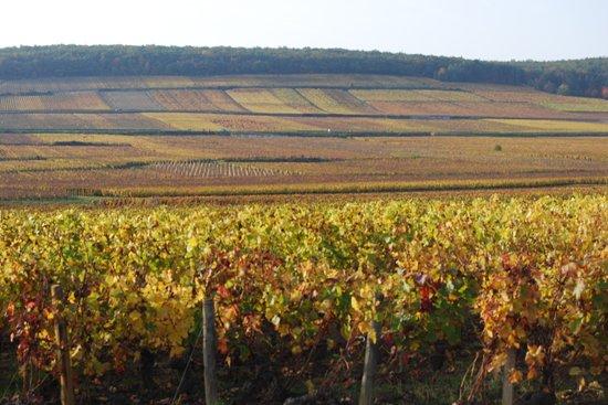 Aux Quatre Saisons Wine Tours