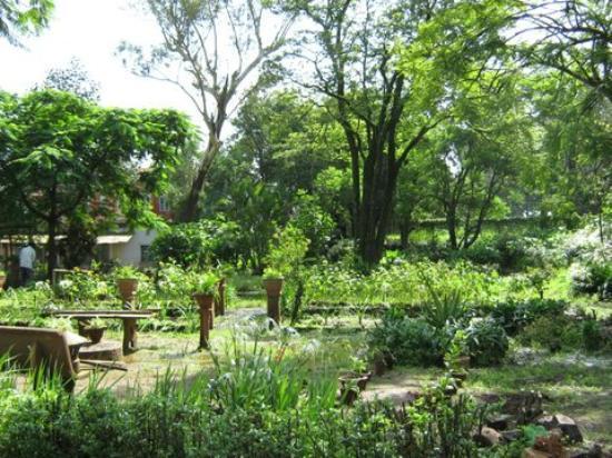 Maidstone: The gorgeous garden