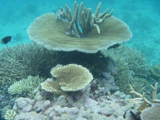 Taveuni Island Resort & Spa: Snorkeling
