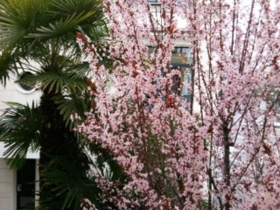 Terme Milano Hotel : albero fiorito davanti alla finestra della camera
