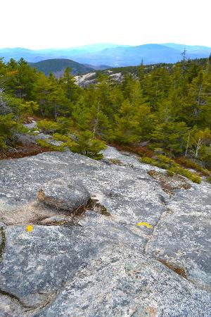 Welch Mountain and Dickey Mountain Loop