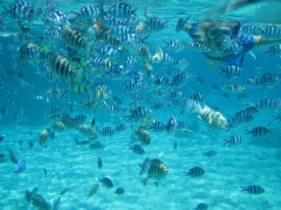 2 many fish