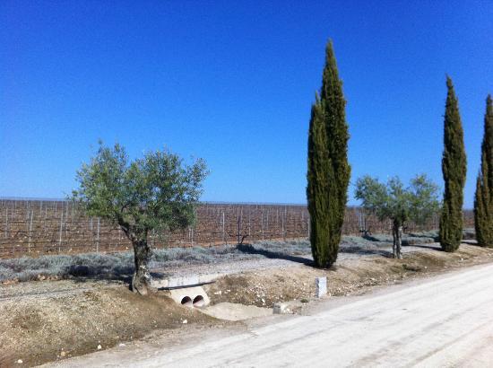 Hacienda Zorita Natural Reserve: Así se ven los viñedos en primavera