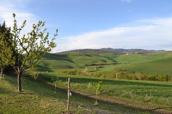 Agriturismo Biologico Bellaria: Entorno