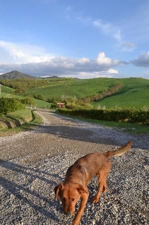 Agriturismo Biologico Bellaria: Ernesto