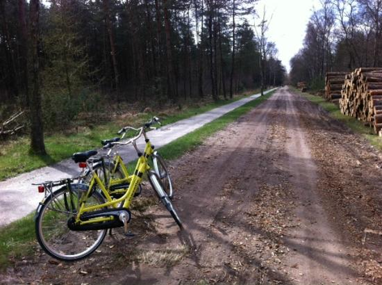 Hotel Dennenheuvel: Great bikes for rent! Recommended