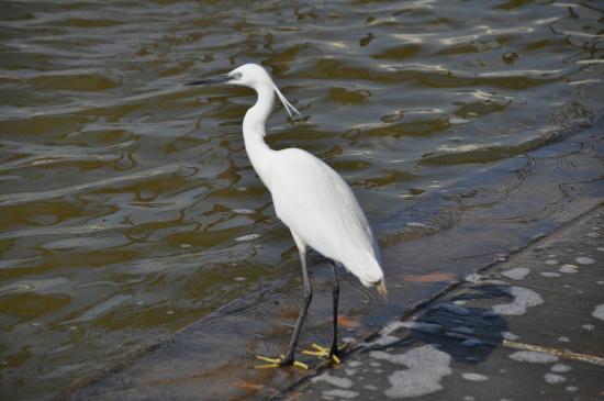 Yarkon River and Park Hayarkon: birds at Hayarkon Park