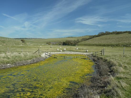Seven Sisters Country Park : Around Cuckmere Haven