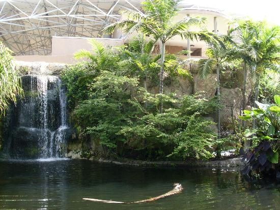 Parrot jungle and gardens miami garden ftempo for Anaheim majestic garden hotel yelp