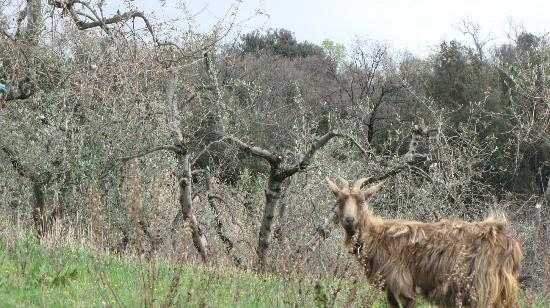 Belmonte Vacanze: Capretta