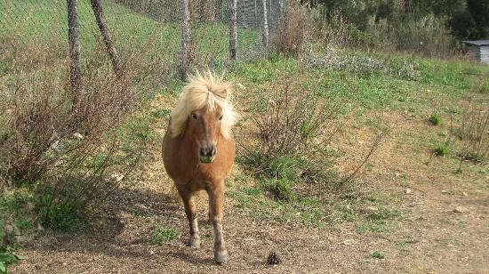 Belmonte Vacanze: Pony del centro vacanze