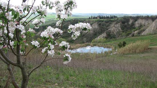 Belmonte Vacanze: Fioriture di primavera