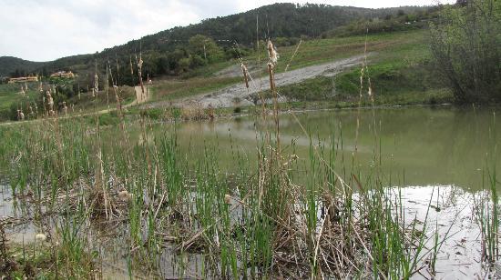 Belmonte Vacanze: Vista da uno dei laghetti