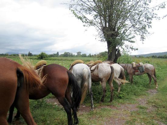 SAYTA: horses