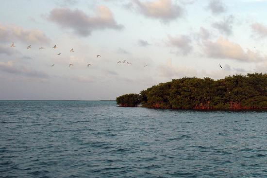 آزول ديل مار: Everglades' Bird Sanctuary