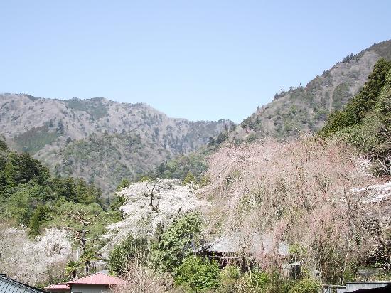 Mt. Minobu Kuonji Temple : 菩提梯の左手(これからの桜も)