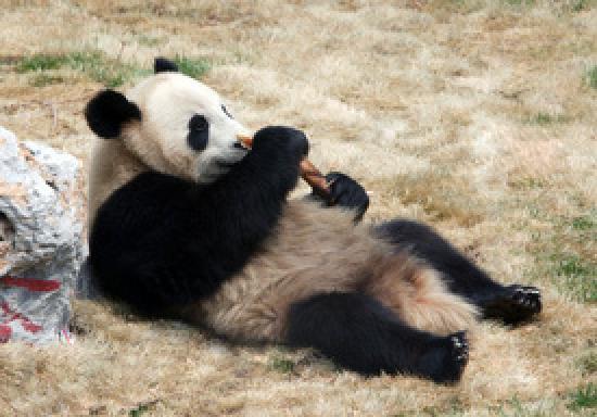 Panda House panda house, beijing zoo - picture of the china guide, beijing