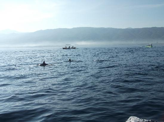 Lovina Beach, Indonesia: dolphins from far