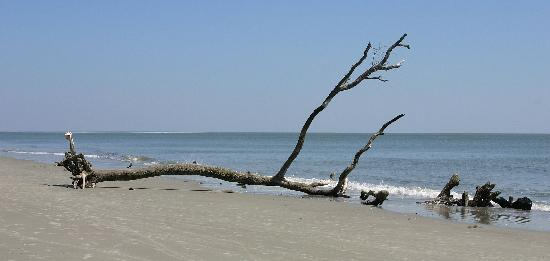Hunting Island State Park: Hat Stand (Note hat on root.)