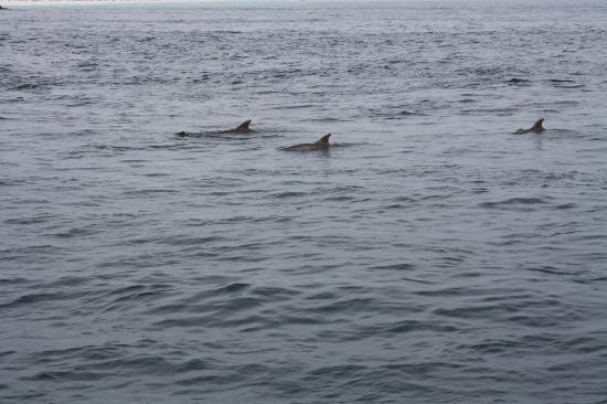 Santa Rosa Beach, Floride : dolphin spotting!