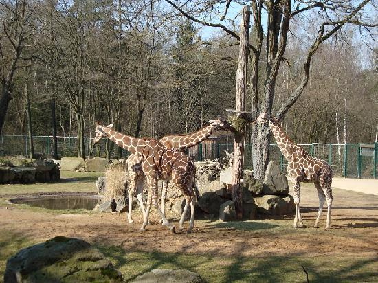 Nuremberg Zoo: nurnberg zoo