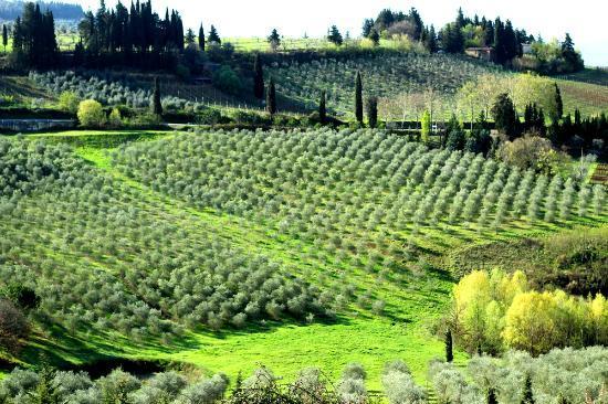 Villa San Filippo Resort: Panorama dal terazzo