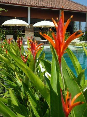 Casa Asia: fiori...fiori ..fiori