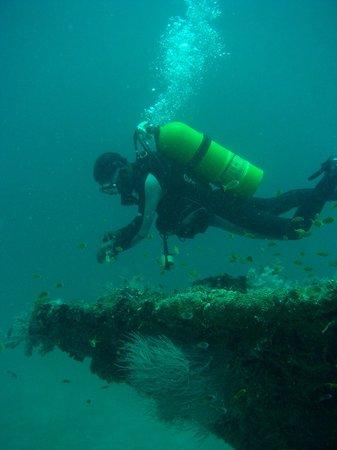 Arabian Diver