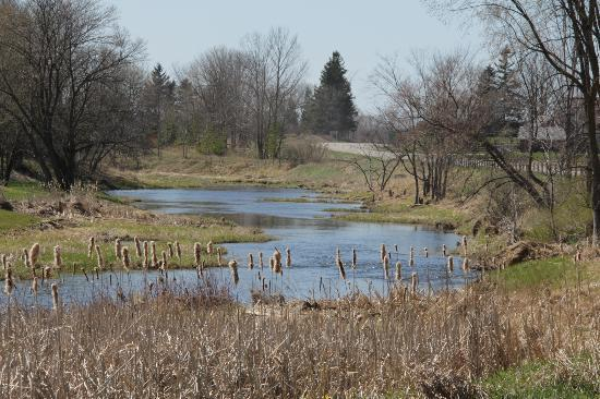 Bruce County, แคนาดา: Views of Saugeen River