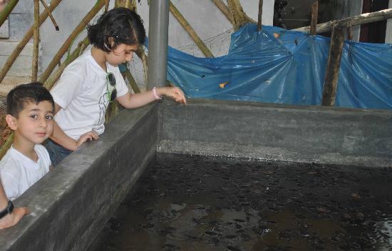 Kosgoda Sea Turtle Conservation Project: KIDS HOLDING LIL TURTLES