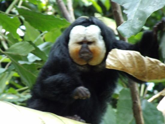 Moody Gardens Hotel Spa & Convention Center: Rainforest Pyramid - monkey studies dad as we study monkey!
