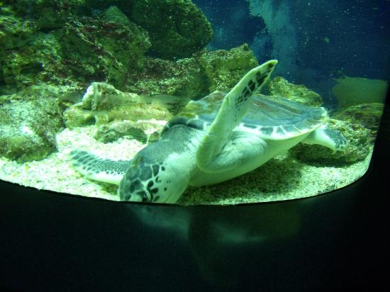 Aquarium Pyramid - Swimming Tortoise - Picture of Moody Gardens ...