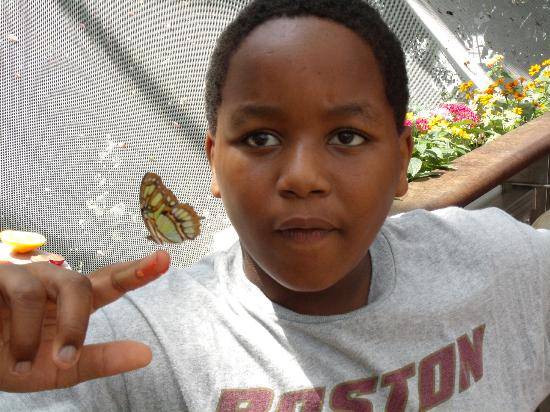 Moody Gardens Hotel Spa & Convention Center: Rainforest Pyramid - Butterfly on Jayson's finger