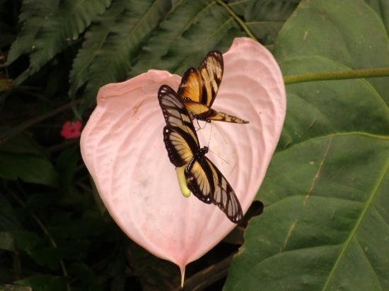 Mindo Cloud Forest Day Tours: Mariposas en Mindo