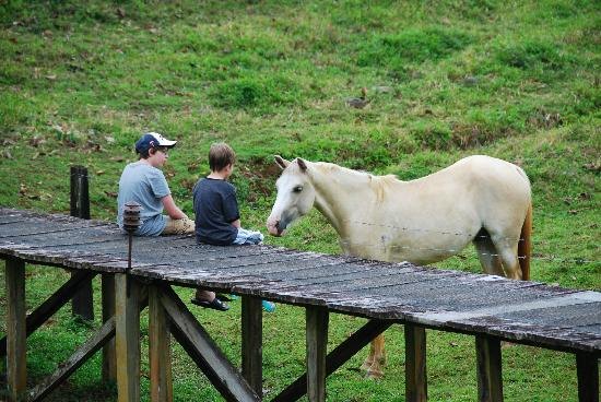 La Anita Rainforest Ranch: The dog horse Trueno