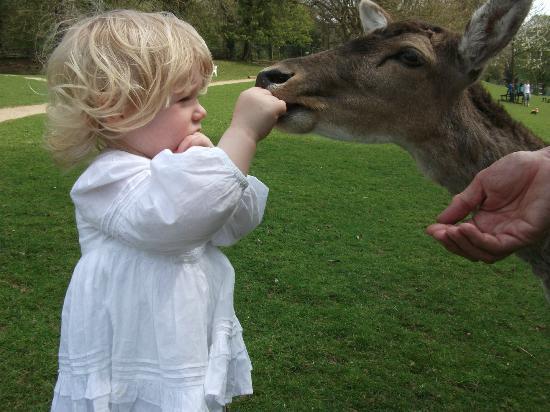Prinknash Bird And Deer Park: Deer Feeding