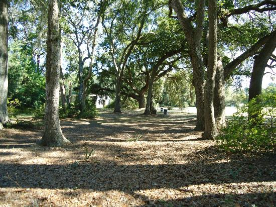 Charleston Plantation Tours Review