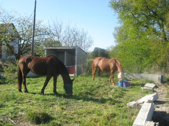 French Activity Holidays: The beautiful horses, Dax and Asti, Dax is a recently rescued horse who Jill has adopted, bless