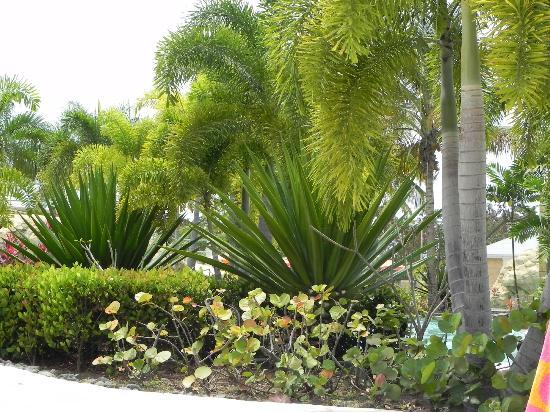 Mayaguez Resort & Casino : Garden view