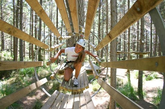 Tree Adventures: The perfect venue for a day of adventure