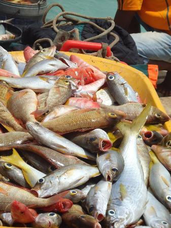 Hotel Oasis Belorizonte : Peixe no pontão