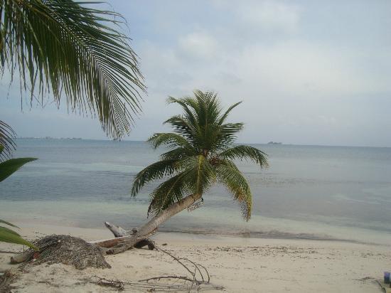 Purple Pelican Grill : Playa Blanca