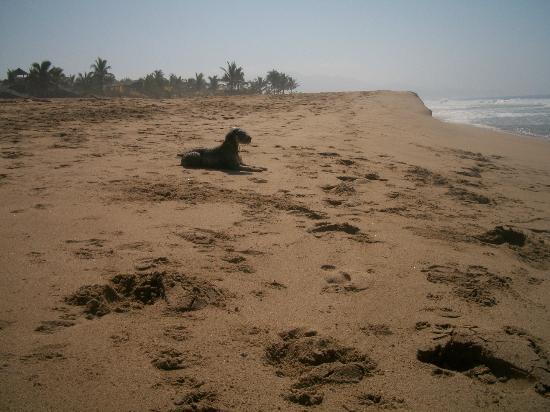 Sol y Arena Beach Hostel: un lugar paradisiaco donde puede ir ese gran amigo.