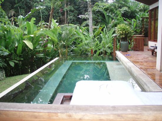 Four Seasons Resort Bali at Sayan : Our pool in the jungle